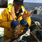 Lobster caught in Shetland